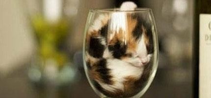 TEEPR研究指出,貓其實是...這15張照片就是你的解答!