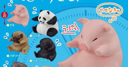 日本推「吃太飽了」小動物扭蛋 「貓咪困惑模樣」太傻萌!