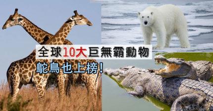 全球「體型最大動物」TOP10 「第2名」竟然是桌上美食!