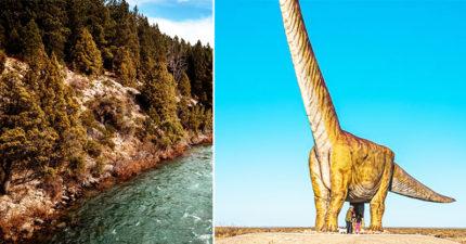 「地表最巨大」生物出土 出動千人部隊「5分鐘全滅」