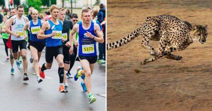 其實人類是「唯一能長跑」的動物!獵豹來比馬拉松會慘輸