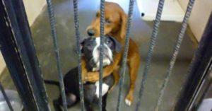 浪浪安樂死前「互抱對方」不想分開 暖照奇蹟「救了狗狗生命」